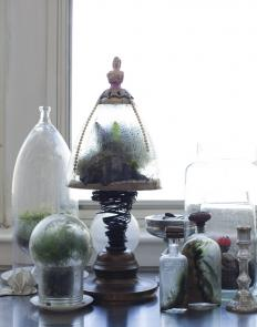 kendra smoot terrariums.jpg
